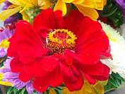 Various flowers.