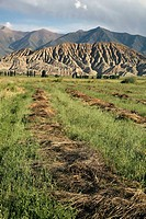 Landscape, Kochkor district, Kyrgyzstan