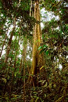 Tropical jungle in Tambopata National Reserve, upper Amazon region, Peru.