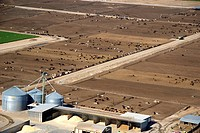 Aerial view of a cattle feedlot near Eagle, Idaho.