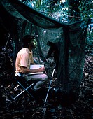 A biologist using night_vision scope to view tape recorders that play frog mating calls, which are used for research on frog eating bats, Barro Colora...