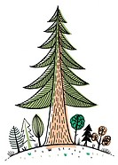 A large redwood tree towering over smaller trees