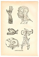 Illustrations of arteries from a vintage medical book