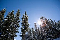 Sunshine on Snow_Covered Trees