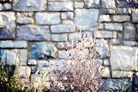 Stone Wall and Plants in Outdoor Landscaping