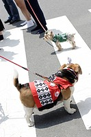 Dogs on pesdestrian crossing, Tokyo, Japan
