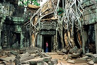 Ta Prohm temple with fig tree, Angkor, Siem Raep, Cambodia, Asia
