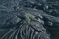 Lava on a volcanic landscape, Hawaii Volcanoes National Park, Hawaii, USA