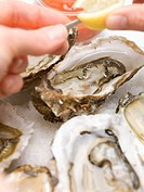 Sprinkling fresh oysters with lemon juice