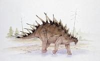 Palaeozoology - Jurassic period - Dinosaurs - Kentrosaurus - Art work by Graham Rosewarne