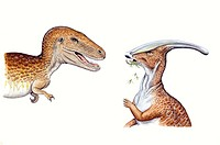 Palaeozoology - Cretaceous period - Dinosaurs - Albertosaurus (on the left) and Parasaurolophus - Art work