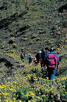 Italy - Sicily Region - Etna Natural Park - Slope down to Mount Dolce (Sweet) - Euphorbias
