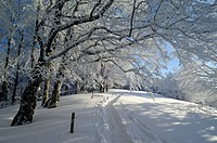winter_landscape, trees, way, snow_covered