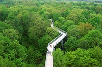 Treedsop_path, visitors, national_park Hainich, Thuringia, Germany,