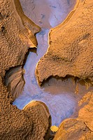 USA, Utah, Zion National Park.  Oil covers the water of small stream leading into the Virgin River in Zion Canyon