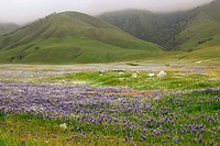 Wildflowers bloom in the spring in Southern California
