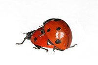 animals, beetle, austria, alfred