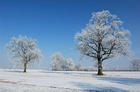 Frost, blue, freeze, coldness, cold, hoarfrost, aargau (thumbnail)