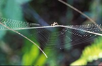 close_up, araneae, CLOSE, branch, bough, cobweb, animals