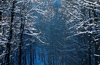 frost, branch, forest, cold, calf, glitter, austria