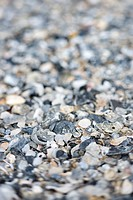 Mixed and broken sea shells
