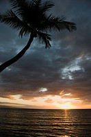 Sunset over Pacific Ocean with palm tree