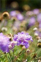 Purple flowering plant (thumbnail)