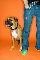 Young adult Caucasian male with hand in pocket with Boxer dog