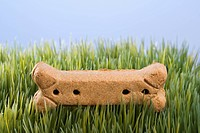 Studio shot of a dog treat laying in grass