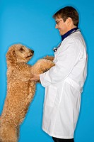 Middle_aged Caucasian male veterinarian with Goldendoodle dog