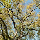 Tree with green leaves against blue sky