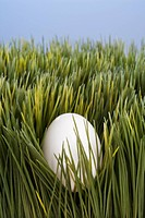 Studio shot of a white egg buried in grass