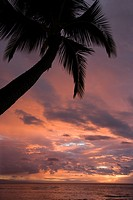 Palm tree on coast silhouetted against glowing sunset