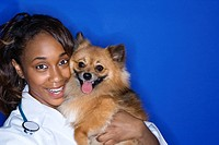 African American young adult female veterinarian holding brown Pomeranian dog