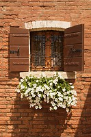 Basket of white petunias hanging from window sill against brick wall