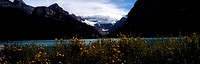 icecap, wild flower, lake, river, flower, panorama