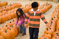 Kids choosing pumpkins