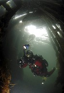 Diver inside British Blockship FC Pontoon, Scapa Flow, Orkney islands, Scotland, UK