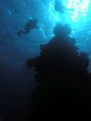 Divers silhouetted as they hover near a coral pinnacle. Red Sea. Egypt