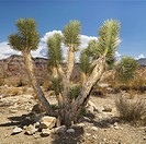 Desert landscape with tree (thumbnail)