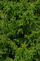 vegetation, wild, yield, fleshy, organic, foliage