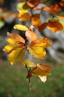 close_up, autumn, CLOSE, brown, branch, alfred