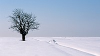 weinviertel, austria, blanket of snow, branches, calf, cold