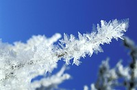 blue, bough, branch, CLOSE, close_up, cold, crystal