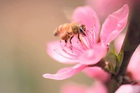 animal, bee, flower, plant, nature, arthropod, insect