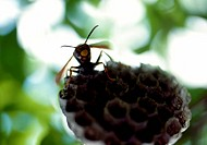 wasp, nature, beehive, wild, scene, tree, landscape