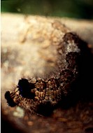 Branch, nature, caterpillar, closeup, scene, animal, landscape (thumbnail)