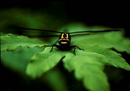 arthropod, nature, animal, leaf, scene, anthropods, landscape