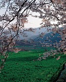 scenery, spring, landscape, field, mountain, scene, nature
