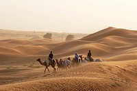 dubai, camel, desert, travel, safari, people, wind